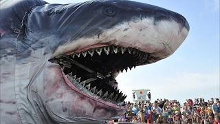 Die 10 größten Tiere, die es je gegeben hat