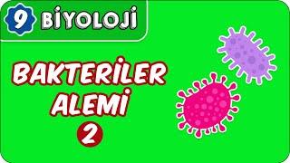 Bakteriler Alemi -2   9.Sınıf Biyoloji