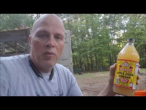 best-backyard-chickens-treatment-chicken-with-diarrhea-apple-cider-vinegar