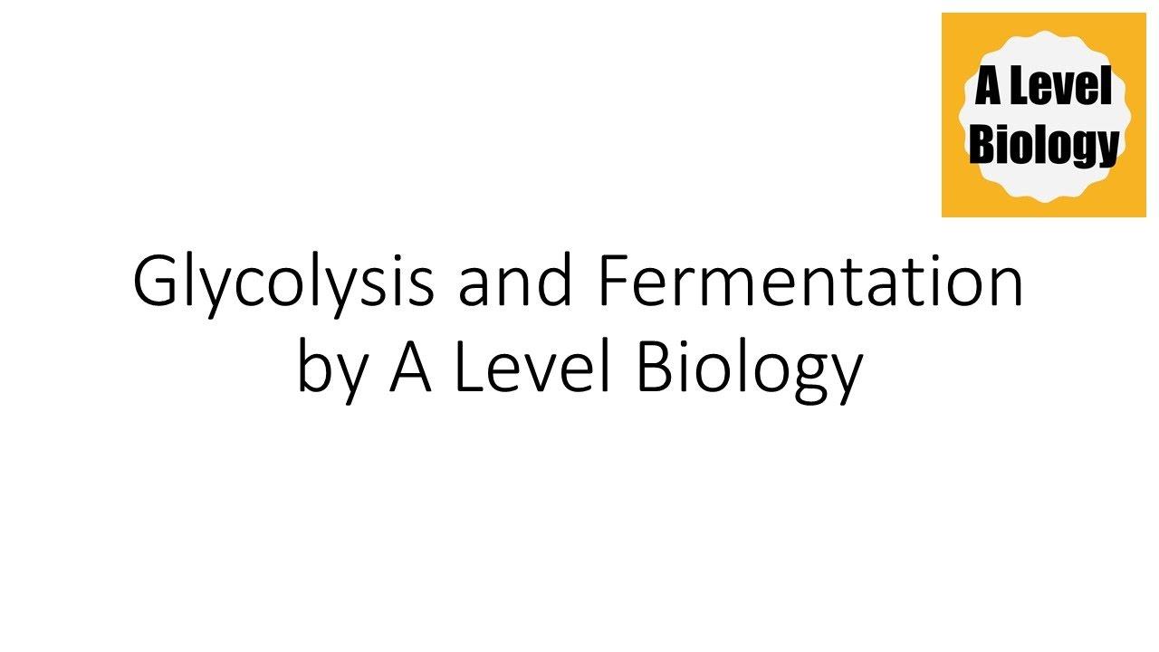glycolysis and fermentation