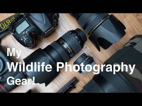 What's in my Wildlife Photography Kit bag