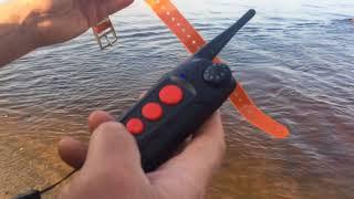 Электронный ошейник Aetertek AT 918С AT 919С тест на водостойкость