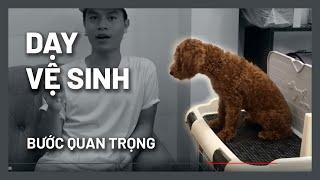 Bí quyết dạy cún đi vệ sİnh thành công | Huấn luyện chó cơ bản BossDog