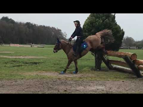 Somerford Park Cross Country schooling April 4th 2019