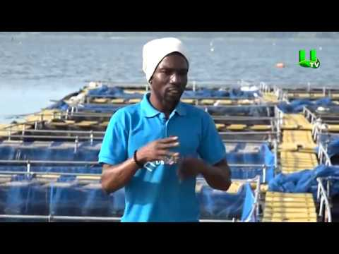 AYEKOO: Cage Fish Farming In Ghana