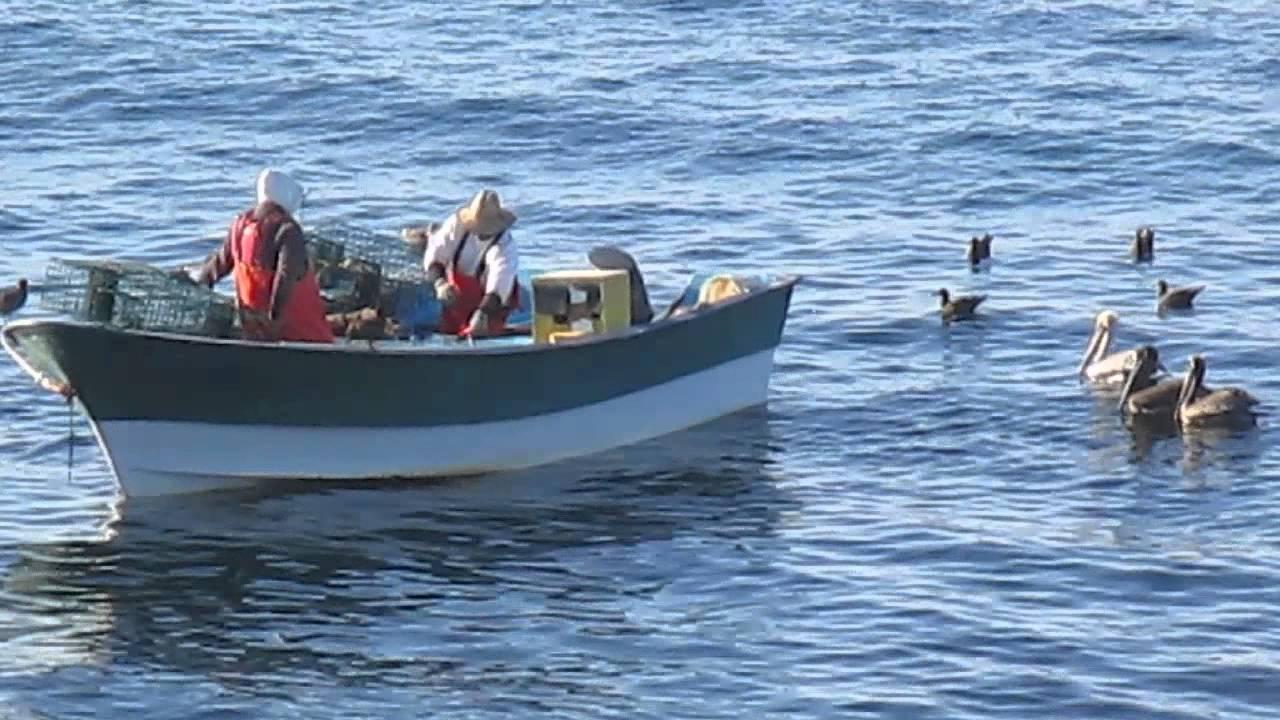 Lobster fishing in bahia asuncion youtube for Lobster fishing san diego