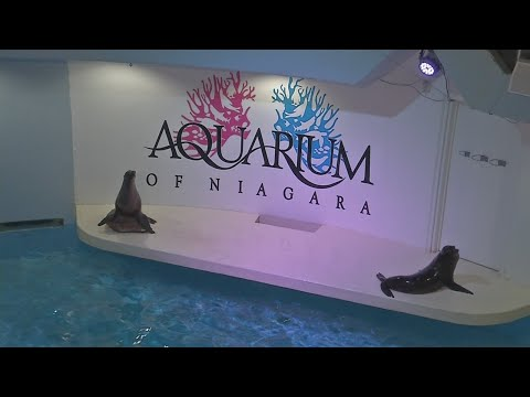 Buffalo Behind the Scenes: Aquarium of Niagara