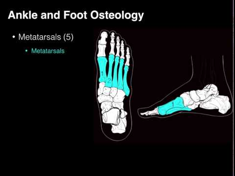 Osteo of Ankle and Foot