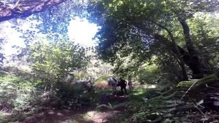 Ferme équestre de Margnot, Randonnée au lac de lavaud gelade, Creuse