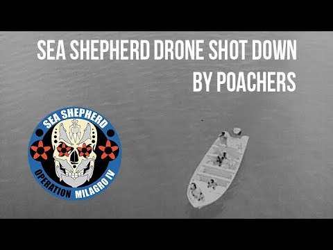 SEA SHEPHERD NIGHT DRONE SHOT DOWN BY POACHERS