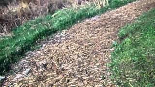 Running - long distance video 7