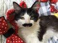 【感動】教会の募金箱から助けを求める子猫の声が!
