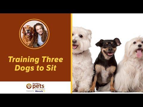 Training Three Dogs to Sit