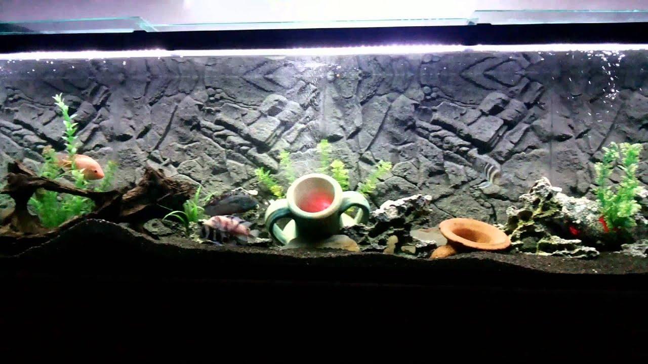 allestimento acquario con sfondo 3d juwel granite. - youtube - Sfondo Esterno Per Acquario Fai Da Te