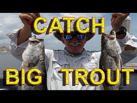 HOW TO Catch Giant Summer Speckled Trout!