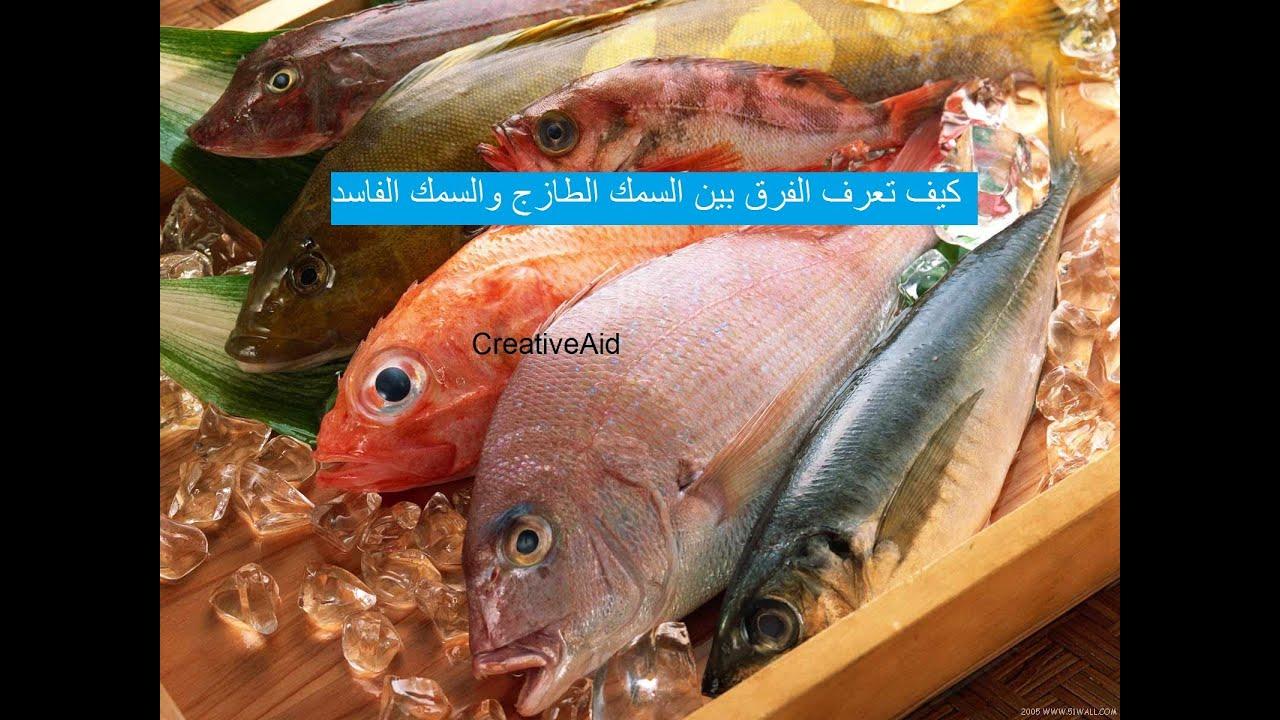 كيف تعرف الفرق بين السمك الطازج والسمك الفاسد Creativeaid Youtube
