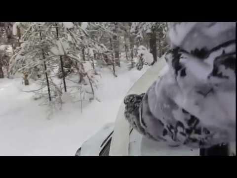 Снегоход Тайга СТ 500Д в лесу