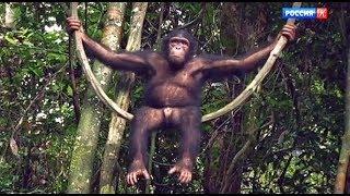 История обезьяны по имени Канель