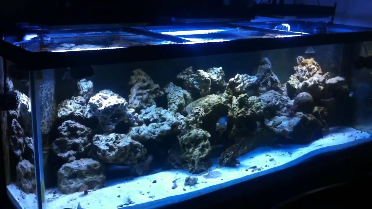 Freshwater fish tank alkalinity - Alkalinity Problems Solutions