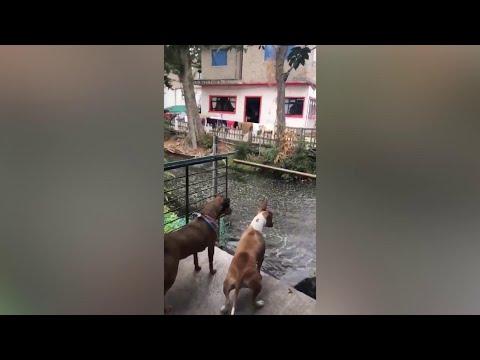 Terremoto in Messico, la scossa fa saltare i pesci fuori dal canale