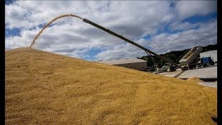 Wheat Harvesting Machine of Modern Agriculture and New Technology Amazing Wheat Farming Equipment