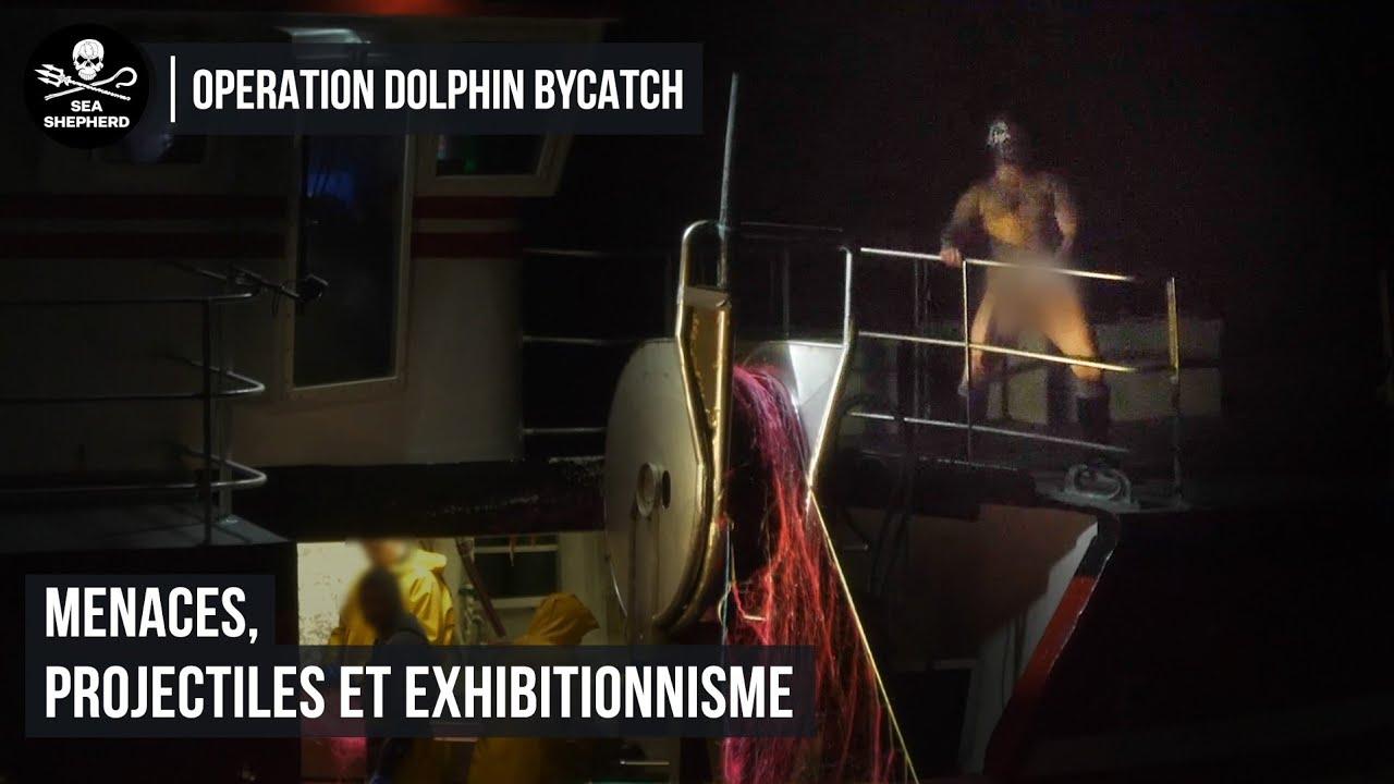 Dolphin ByCatch : menaces, projectiles et exhibitionnisme