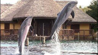 Discovery Point Dolphin Presentation at SeaWorld San Antonio 10-26-18
