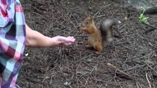 Ручна білка. Manual squirrel
