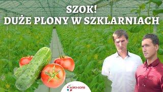 Polskie Aminokwasy Agro-Sorb - Pomidory i ogórki w uprawie szklarniowej - PolskieAminokwasy.pl