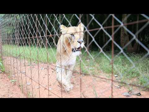 Gorgeous Bella at the Lilongwe Wildlife Center, Malawi