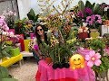 Mother S Day Gift Ideas Shopping For Orchids Choosing A Healthy Orchid