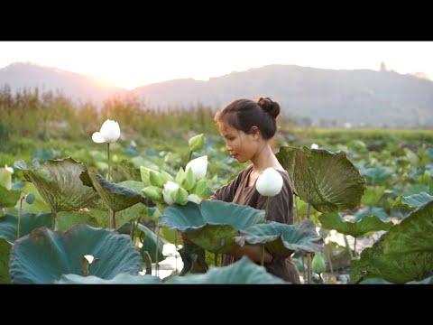 Vegan Food- Hái Sen Làm Trà Và Bữa Cơm Ấm Áp | Lotus Tea