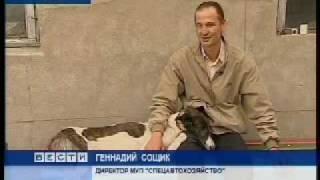 """ОРОО """"Друг"""" - приют для бездомных животных Омск."""