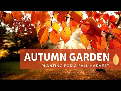 Autumn Garden: Planting for a Fall Harvest