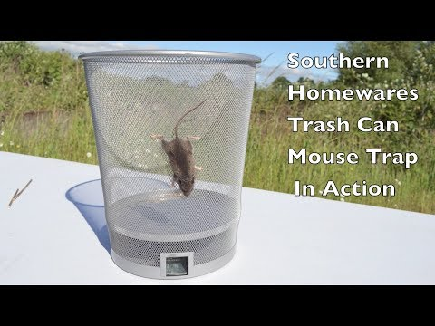Thumbnail: Trash Can Mouse Trap In Action. Southern Homewares Live Catch Mouse Trap In Action