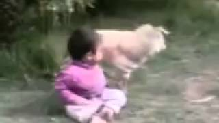 سكس حيوانات