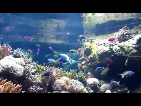 Aquatic animals of the Scott Aquarium at the Henry Doorly Zoo
