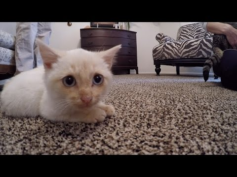 Thumbnail for Cat Video Hi, I'm Lazarus the Frozen Kitten