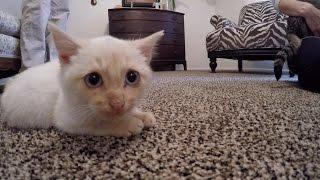 Hi, I'm Lazarus the Frozen Kitten