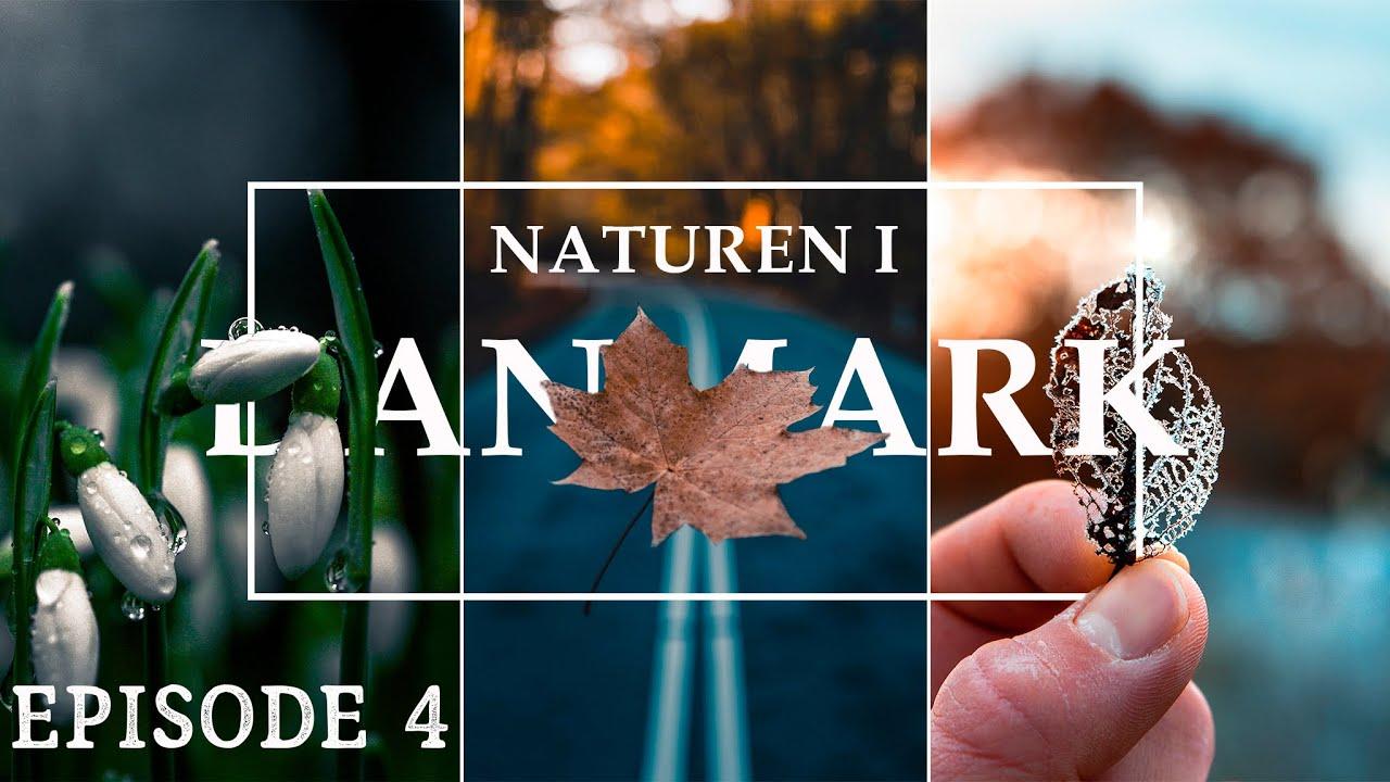 Skovens OVERLEVELSE // Naturen i Danmark