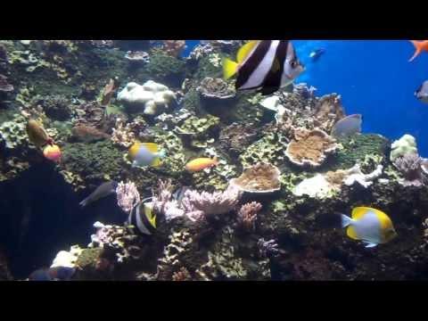 Healthy Hawaiian Reef Fish