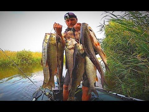 ВОДА КИПИТ ОТ РЫБЫ. ПОПАЛ НА ОСЕННИЙ ЖОР. Рыбалка с ночёвкой в сентябре. 2 часть