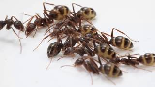 Adrian Smith: Learning About Nature Through Ants
