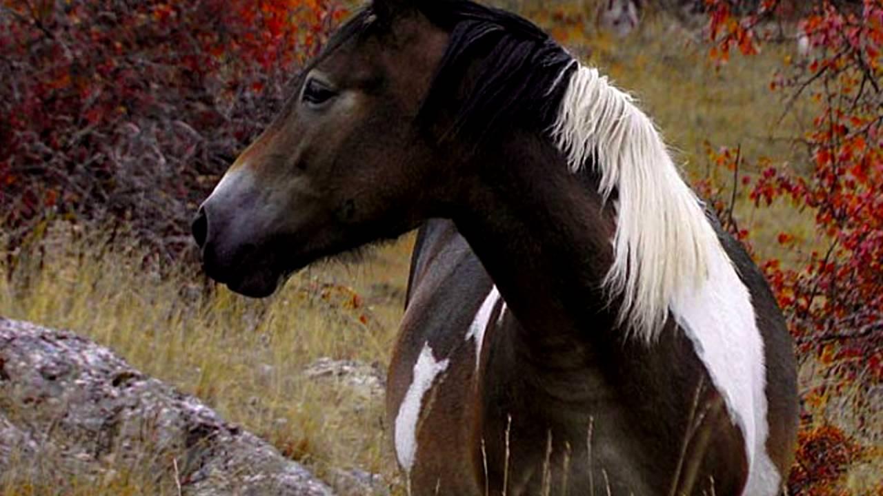 Ремонт седла для лошади - YouTube