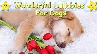 Sleep Music For Puppies Lullaby Lullabies ♫ Calm Relax Your Dog ♥ Lullaby For Dogs Golden Retriever