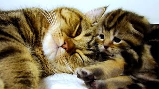 Mom Cat Talking to her Cute Meowing Kittens  20 min BONUS Video thumbnail