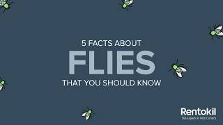 5 Facts About Flies | Rentokil Indonesia