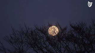 First Halloween full moon in 45 years to rise over Irish skies tonight