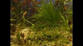Rośliny akwariowe ,kilka slów .:)