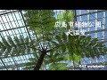 広島市植物公園 大温室 リニューアルオープン ZHIYUN Smooth-Q/iPhone6/SONY/A6300/S…